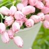 Квітник на зрізання: весняні букети