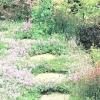 Квітник в саду