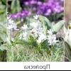 Квітучі багаторічники для тіньового квітника