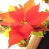 Квітучі рослини взимку