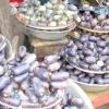 Дакріодес їстівний