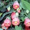 Декоративно-листяні рослини з фотографіями