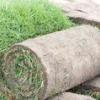 Газон в рулонах і штучна трава - укладання газону за технологією
