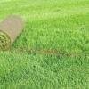 Газонна трава - ландшафтний дизайн своїми руками