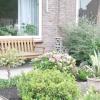 Гортензія крупнолистная в саду: вибір, посадка, обрізка