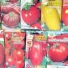 Готуємося до посівного сезону: вибираємо насіння томатів