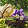 Хитрощі і доступні поради починаючому садівникові