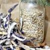 Зберігання насіння в домашніх умовах