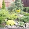 Хвойники в ландшафтному дизайні саду