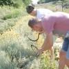 Липнева жнива: прибираємо трави