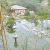 Японський сад парку лок «Айвазовське» (крим)
