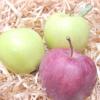 Як зберігати яблука взимку свіжими да подовше