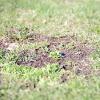 Як позбавити газон від бур'янів