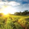 Як навчитися городництва у природи