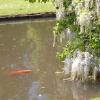 Як обладнати ставок для запуску риби