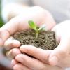 Як підготувати грунт для розсади