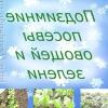 Як отримати ранній урожай? подзимний посів вам в помощь!