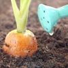 Як правильно поливати овочеві культури