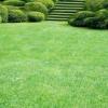 Як правильно зробити газон без допомоги фахівців