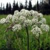 Як зберегти насіння городніх рослин і трав від шкідників, способи боротьби