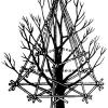 Як уберегти гілки плодових дерев, способи зміцнення