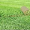 Як влаштувати газон на складній ділянці?