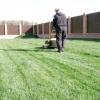 Які роботи потрібно проводити для підтримки газону в порядку?