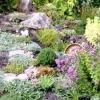 Які рослини вибрати для альпійської гірки