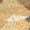 Які насіння овочів вибрати: відмінності українських та іноземних сортів