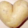 Класифікація та поширені сорти картоплі