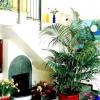 Кімнатна пальма ховея