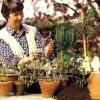 Кімнатні рослини, коли і як робити обрізку