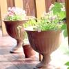 Контейнерні рослини на веранді