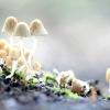 Хто такі гриби?