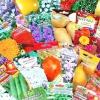 Купити семяна в інтернет-магазинах