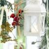 Лікарські трави та рослини