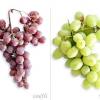 Кращі сорти винограду для Підмосков'я і середньої смуги росії