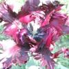 Мої улюблені тюльпани