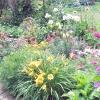 Наповнюємо сад ароматними квітами