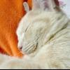 Трохи позитиву: кіт, який посміхається :)