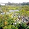 Загальні рекомендації з вибору саджанця та посадці плодових дерев