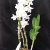 Загальні відомості про орхідеї