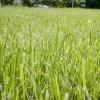 Один сезон газону