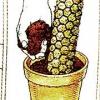 Опора для рослин - моховий стовпчик, як зробити самому