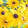 Осіння магія вересневих квітів
