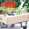 Особливості вирощування великоплідних томатів (помідорів)