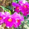 Острів орхідей