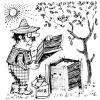 Бджолина пасіка, роботи в травні, правильні поради