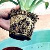 Пересадка кімнатних рослин
