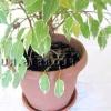 Пересадка рослин